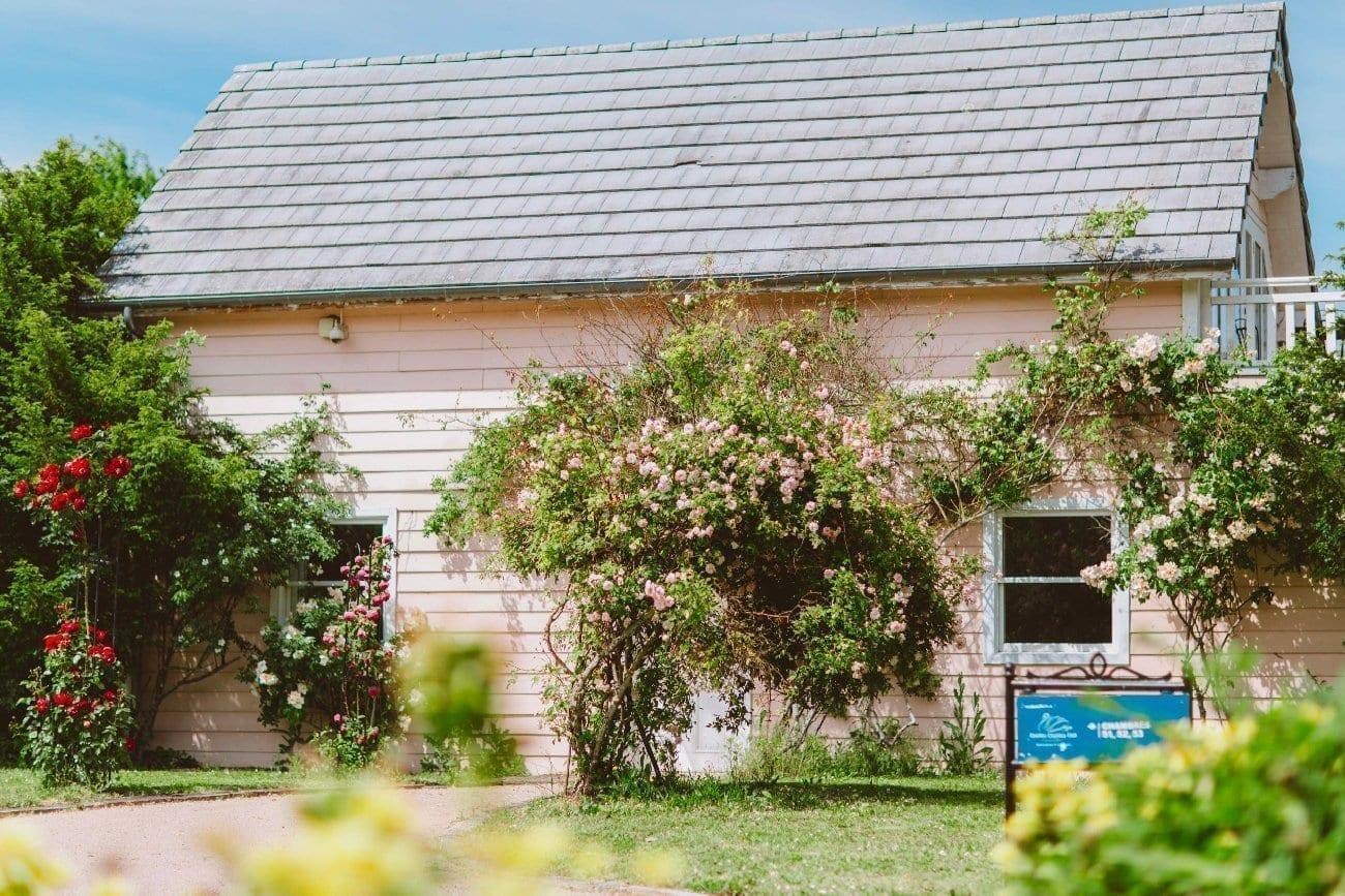 Cottage rose entouré de fleurs